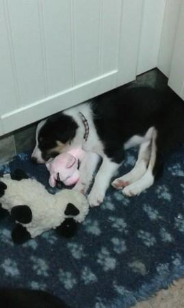 assistenzhunde in rente